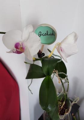 Etichetta pianta con tappo barattolo
