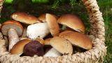 Accessori cucina per conservare e preparare funghi e tartufi