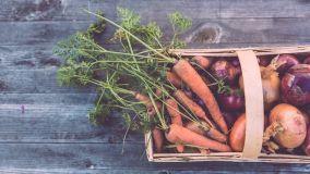 Cosa piantare in giardino e nell'orto in autunno