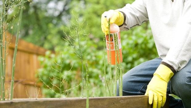 Fertilizzante per il terreno - Fonte foto: Unsplash