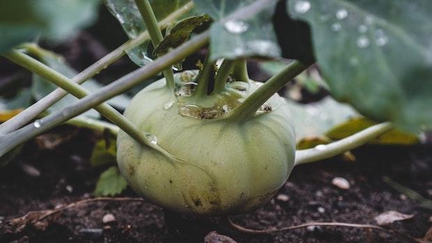 Preparazione del terreno: rimozione delle vecchie piante - Fonte foto: Unsplash