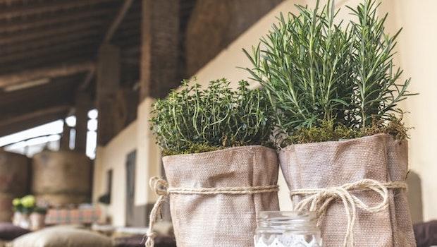 Coltivazioni autunnali: talee di rosmarino - Fonte foto: Unsplash