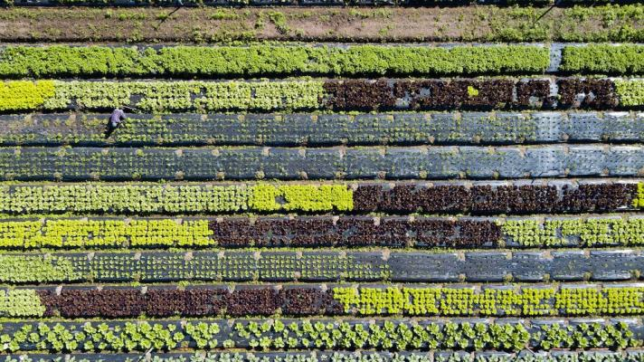 Ortaggi autunnali: varietà di insalata - Fonte foto: Unsplash