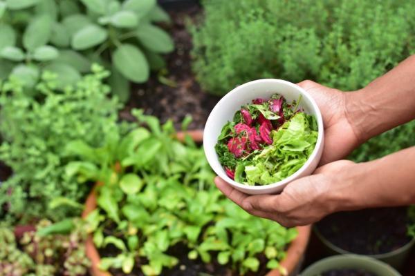 Piante da coltivare in autunno: rape e insalata - Fonte foto: Unsplash
