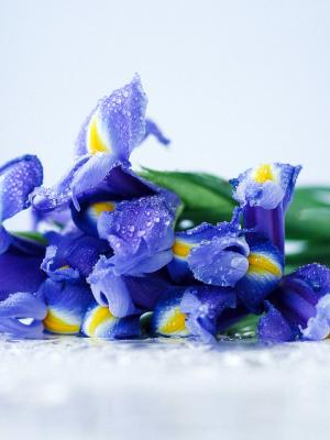 Fiori autunnali: iris - Fonte foto: Unsplash