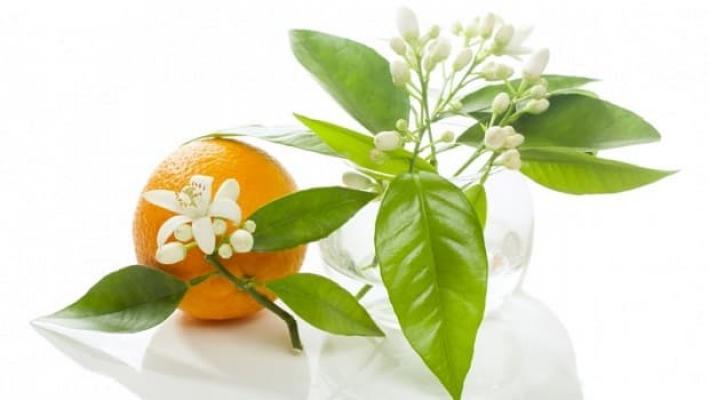 Fiori d'arancio composizione da tun.asia.com