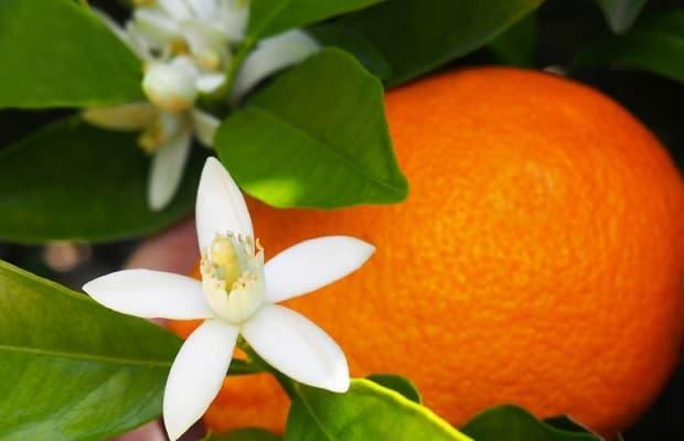 Fiori d'Arancio da lainocosmetics.com
