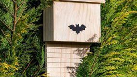 Come costruire una batbox rifugio per pipistrelli