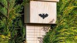 Come costruire una batbox