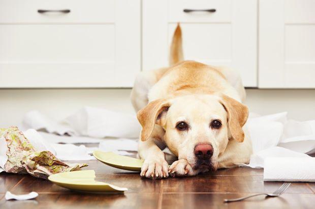 cane e danni in casa in affitto