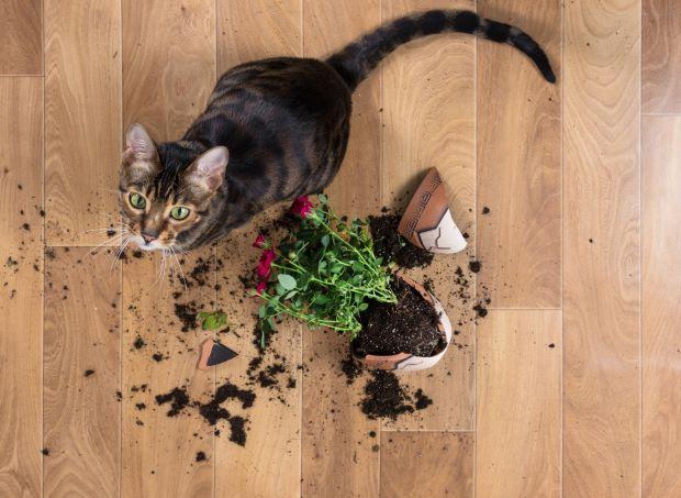 gatti in casa in affitto e danni