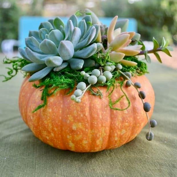 Progetto zucca con piante succulente di Audreyslittlefarm.com