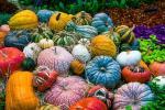 Zucche decorative per composizioni autunnali