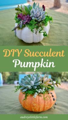 Progetti zucche e piante succulente di Audreyslittlefarm.com