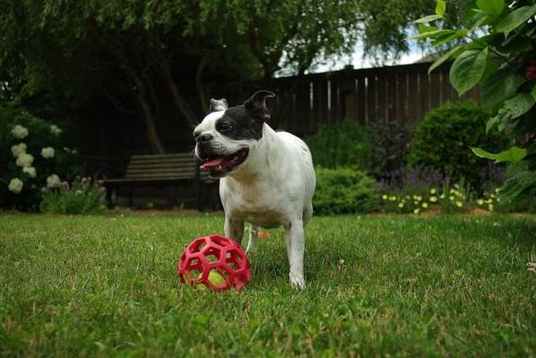 Animali domestici e outdoor