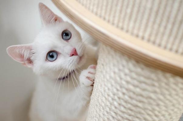Tiragraffi per gatto