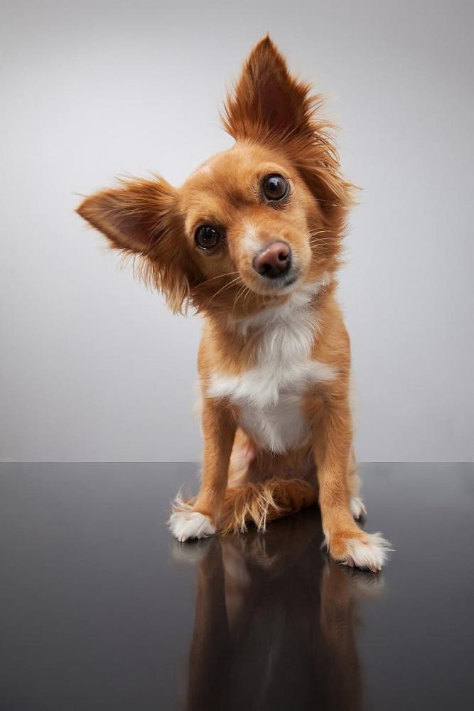 Animali domestici suoni e odori