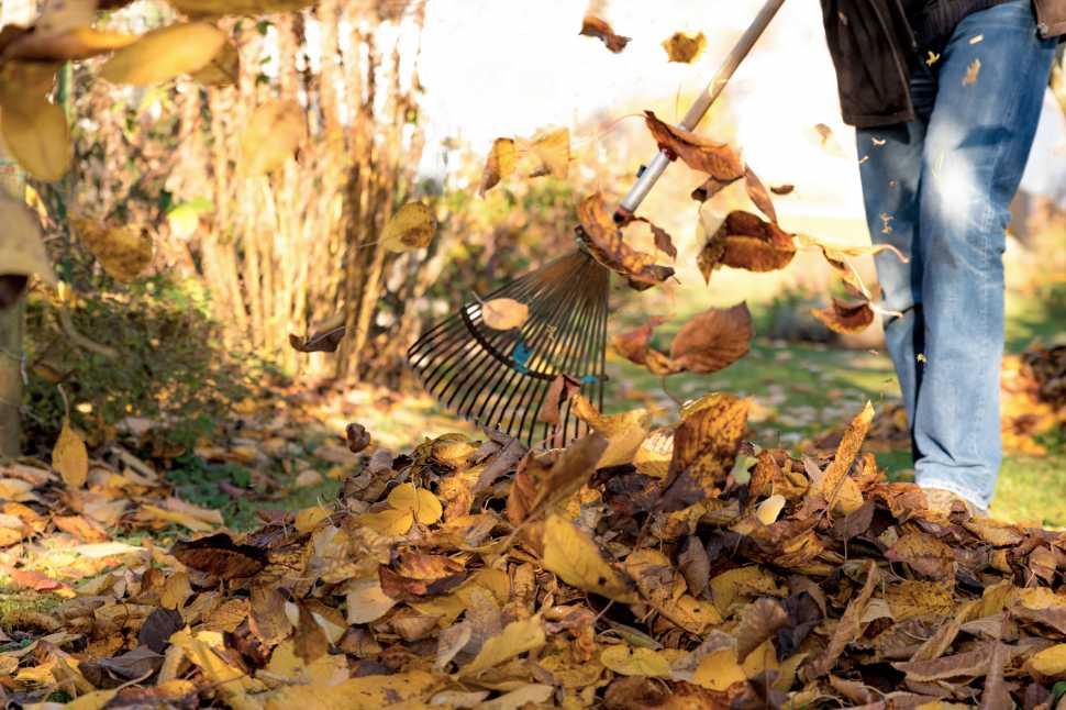 Caduta foglie in giardino in autunno