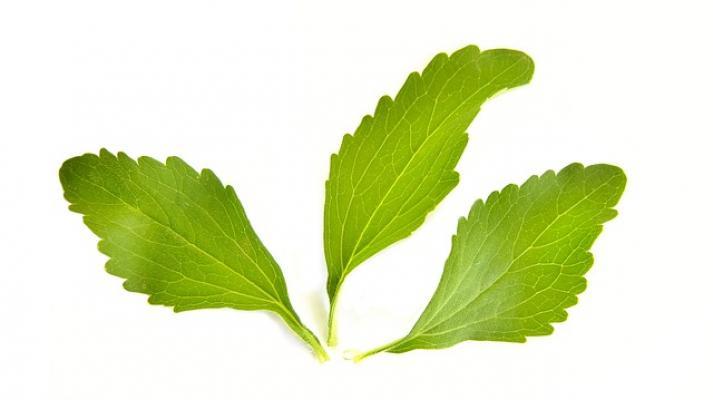 Dettaglio foglie di stevia