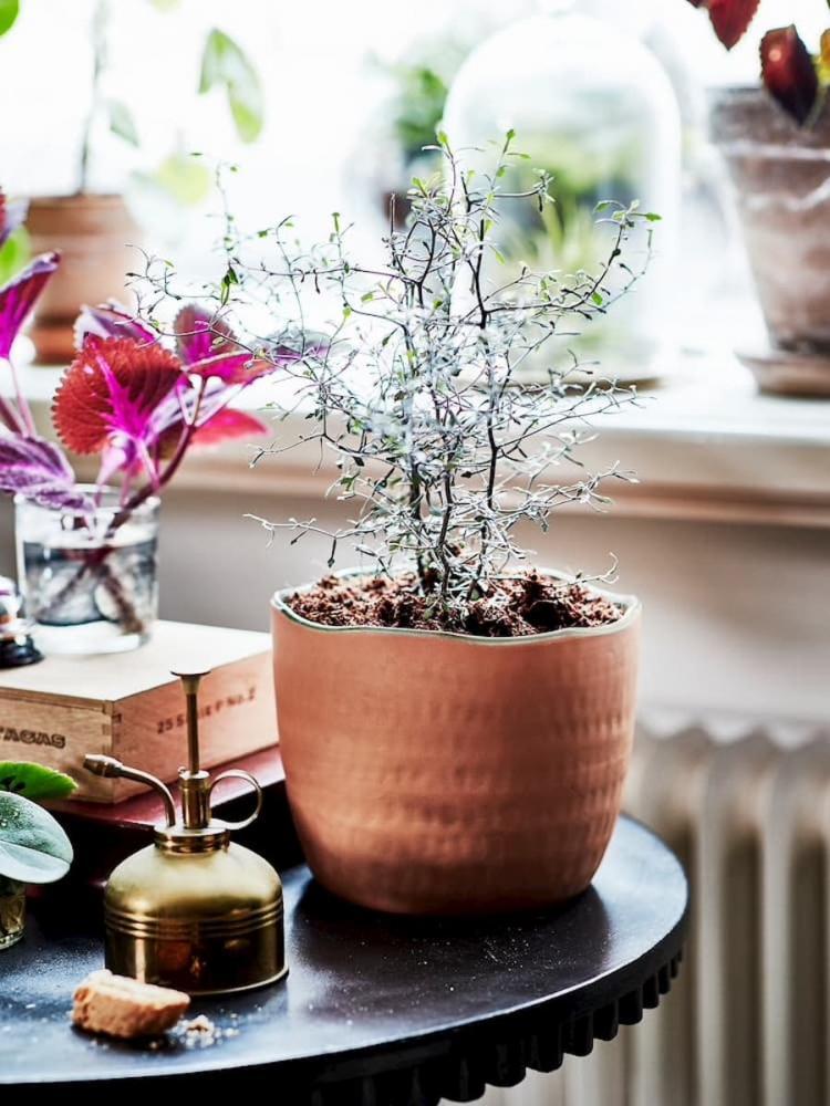 Vaso Ikea Botanisk - Foto by Ikea