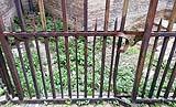 Antica recinzione con parti mancanti o deformate