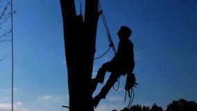 Potatura degli alberi: come effettuarla e cenni sulla normativa