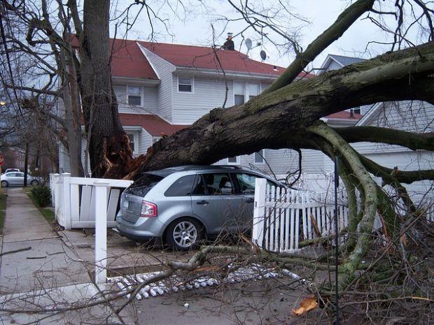 Danno causato da un albero caduto