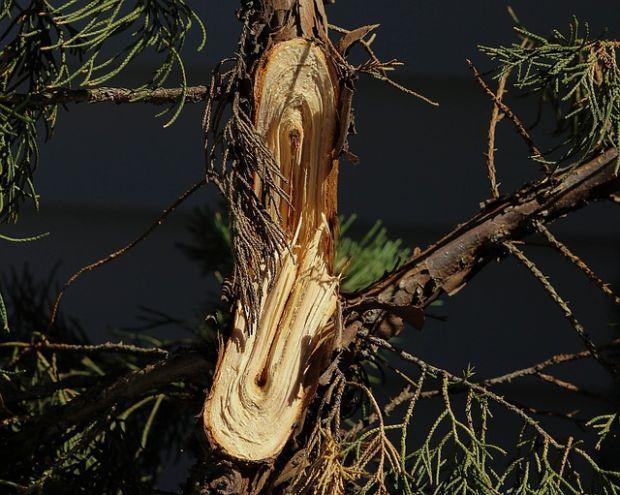 Un ramo danneggiato in questa maniera va rimosso il prima possibile per evitare guai futuri