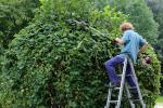 Per alberi più bassi sarà sufficiente una scala