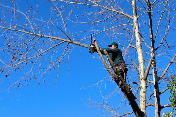 Il metodo del tree climbing è utile per la rimozione di rami molto alti