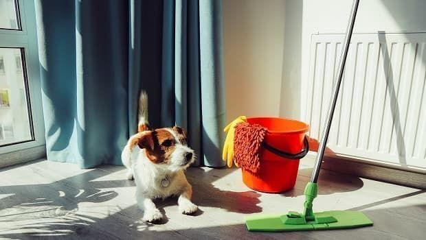 Pulizia casa abitata da animali domestici: i prodotti consigliati