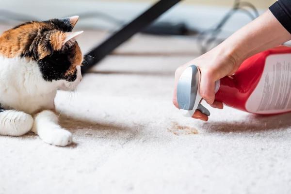 Prodotti casa animali domestici gatto