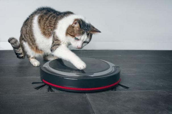 Prodotti casa animali robot gatto