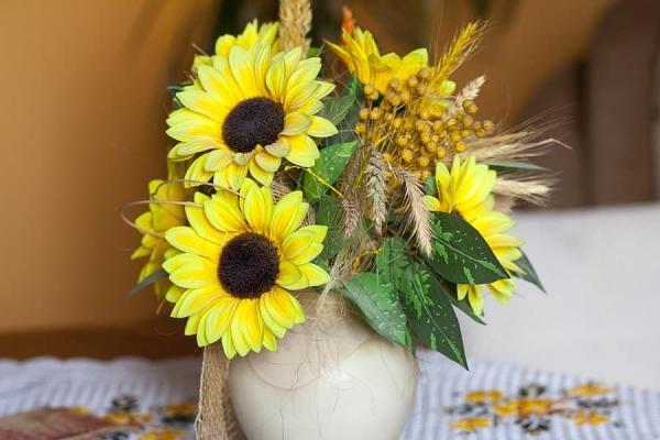 Girasole in vaso