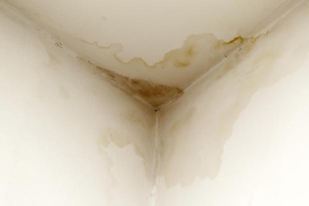 Mold from ceiling infiltrations
