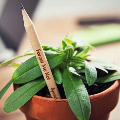 La matita piantabile