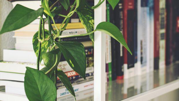 Tanti modi per sistemare i libri con stile in libreria