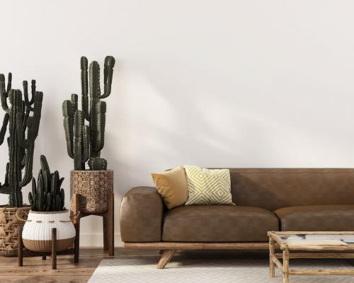 Piante da interni, Cactus