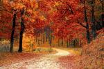 La natura è la più grande tavolozza da cui trarre ispirazione - Pexels