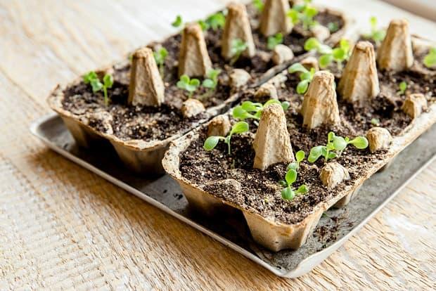 Mini terrario con cartón de huevos, de gardeningknowhow.com