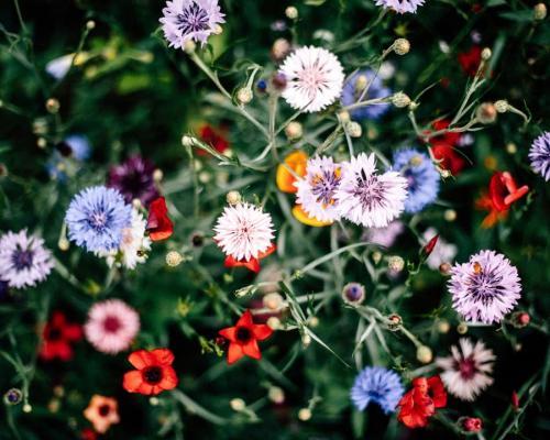 Godere dei giardini fioriti