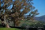 La quercia da sughero ha bisogno di molto sole