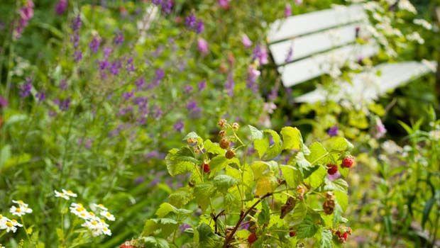 Giardinaggio, spazio alla tendenza del meadow