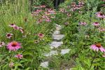 I fiori nel meadow garden, da finegardening.com
