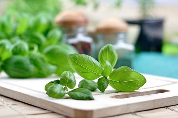 Il profumo delle foglie di basilico