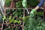 Coltivare basilico con altre specie
