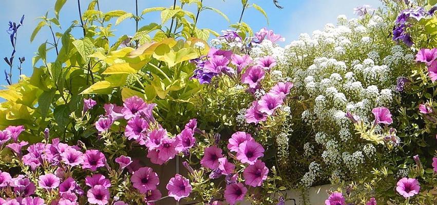 Varie piante erbacee estive