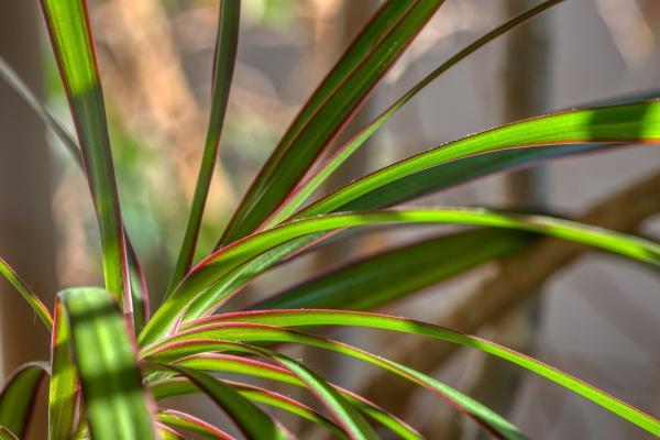 Per facilitare l'app di riconoscimento, fotografare bene le foglie