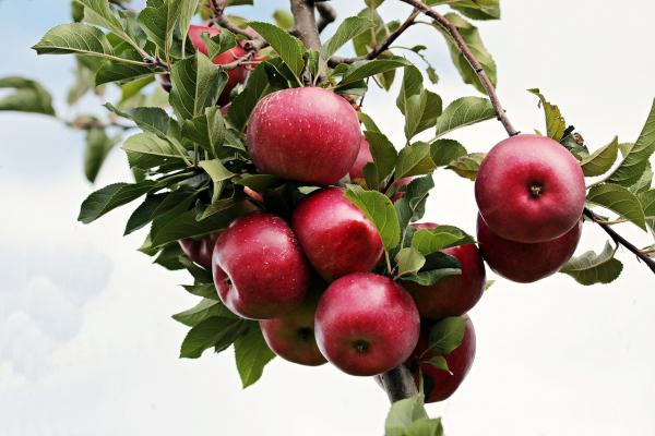 Altre app ancora, riconoscerano facilmente le piante dai frutti