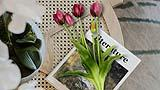 Tulipani artificiali in vendita su Amazon